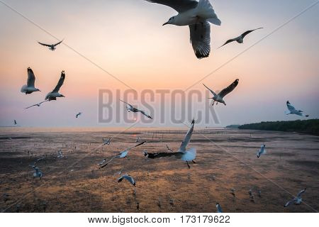 Tranquil scene with seagull flying at sunset at Bangpoo Samut Prakan Thailand is most popular and famous relax in evening time