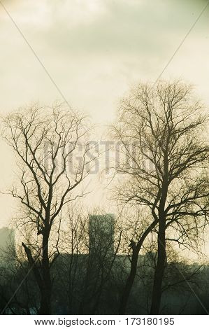 Bare Trees Against The Background Of The Winter Sky