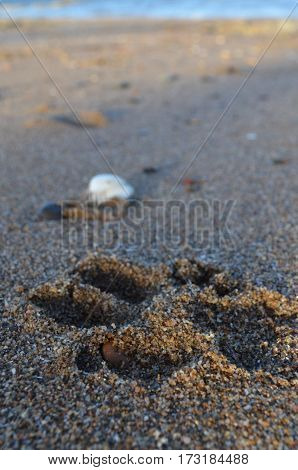 dog paw print in sand on the beach
