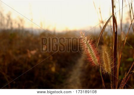 Flowers grass blurred background with copy space.