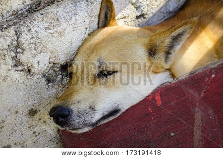 Dog Sleeping At The Old House