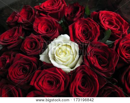 dark red roses and one white rose between
