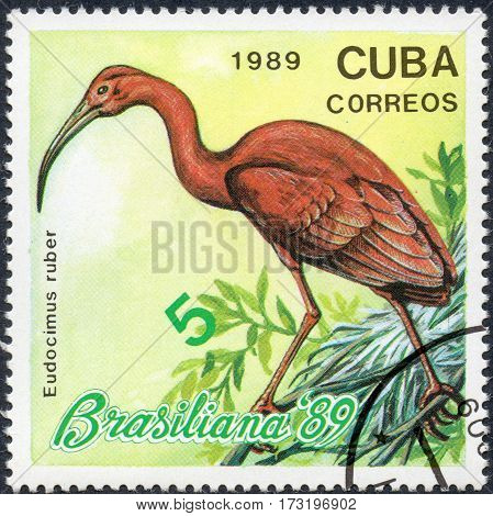 UKRAINE - CIRCA 2017: A stamp printed in Cuba shows a bird Red ibis Eudocimus ruber the series Brasiliana '89 circa 1989