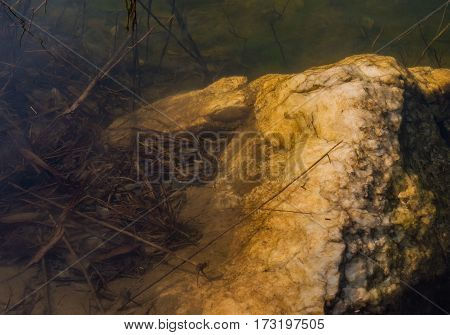 Large boulder underwater surrounded by dead leaves and twigs in the water