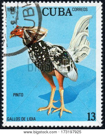 UKRAINE - CIRCA 2017: A stamp printed in Cuba shows a Pinto the series Fighting cocks circa 1981