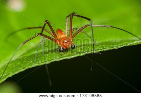 yellow spider was walking among green leaves