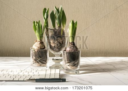 Learning How To Grow Hyacinth Flowers