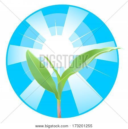 The germ of the corn on the background of the sun's rays. Vector illustration