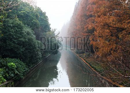 Trees of different colors on a river channel in the fog