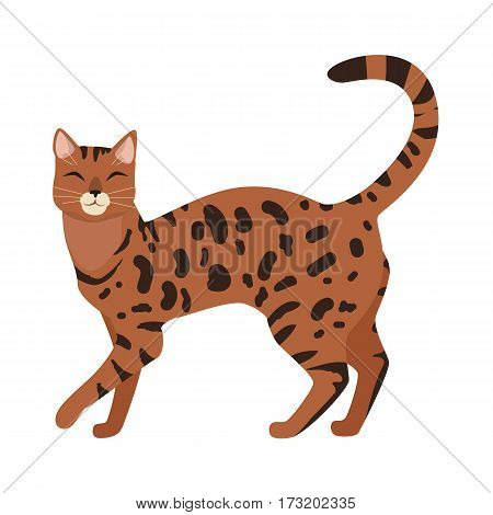 Bengal cat breed. Cute spotted, cat walking with raised tail flat vector illustration isolated on white background. Purebred pet. Domestic friend and companion animal. For pet shop ad, hobby concept