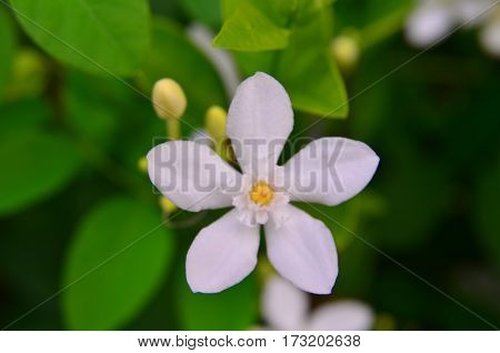 white flower with leaves on the tree