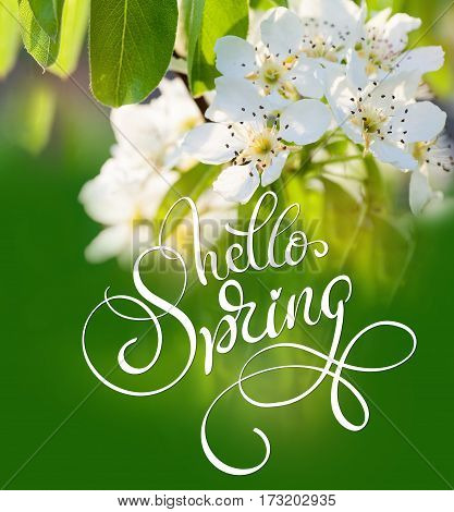 beautiful flowering tree with green leaves in the spring close up and text Hello Spring. Calligraphy lettering.
