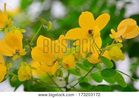 yellow flowers with green leaves on the tree