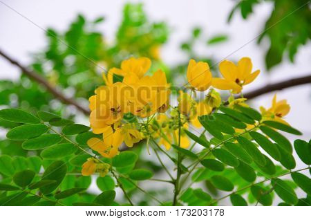 yellow flowers with Leaves on the tree