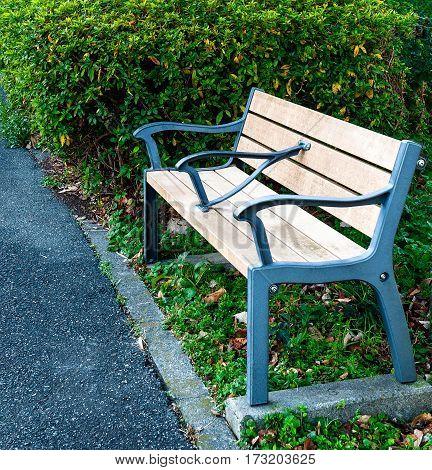 A park bench near an asphalt path set amid hedges and greenery