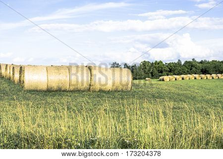 Round hay bales temporarily stored in a hay field under partly cloudy skies