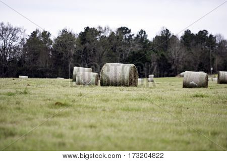 Round hay bales being stored in a field