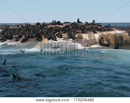 SEAL ISLAND, CAPE TOWN SOUTH AFRICA 14vjo