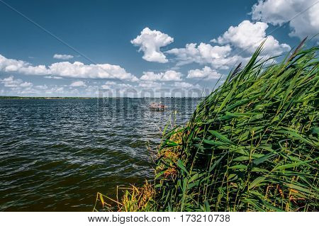 Reeds on the shore of the lake. Sunny windy day.