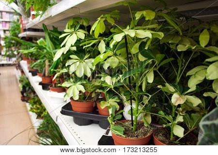potted plants on the shelves of the flower shop