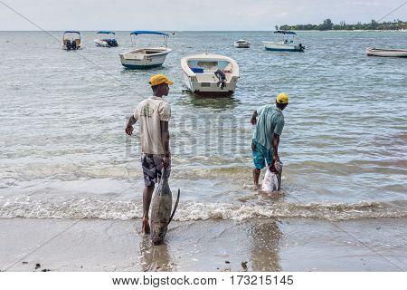 Tamarin Mauritius - December 10 2015: Fishermen pulling large tuna fish at sea for washing on the Tamarin beach in Mauritius.