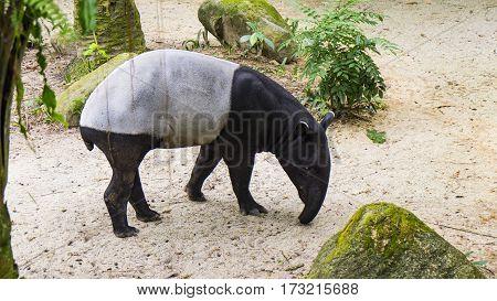 anteater mammal zoo ant green park animal