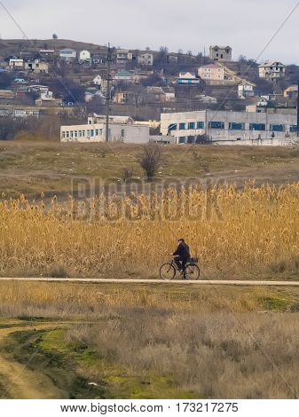 The cyclist riding on the road along the reeds