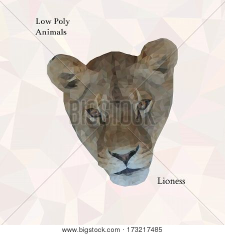 Head of lioness portrait from low poly. Vector polygonal illustration. Realistic image. Collection of triangle animals
