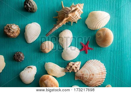 seashells on a  wooden background painted in blue color