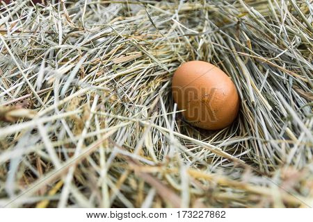 One Egg In The Hen House.
