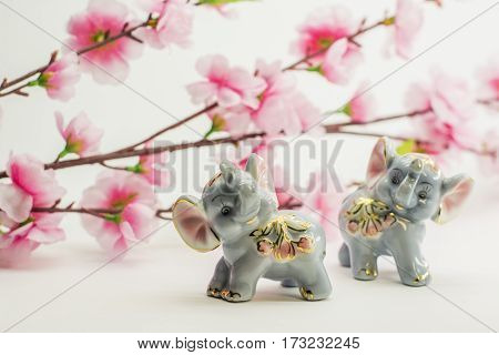 Cherry tree branch with blooming flowers over white background