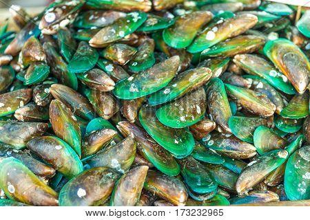 Green Mussel (mytilus Trossulus) Shells Picked At Beach,