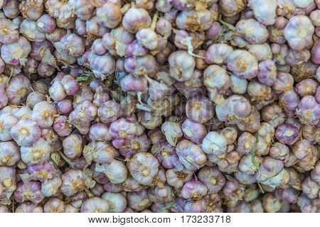 garlic Fresh garlic - Red garlic Garlic group background Garlic cloves background