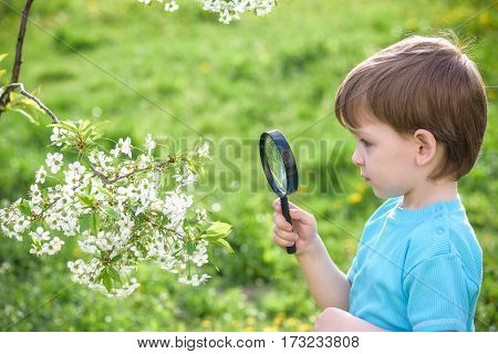 Young boy exploring nature in a meadow with a magnifying glass looking at a ladybird on blooming tree