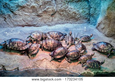 Group of turtles sitting near the water's edge