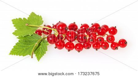 Redcurrant with green leaves isolated on white background