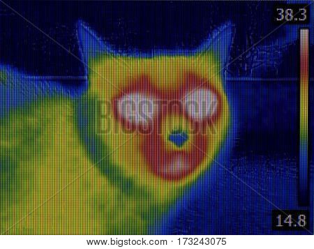 Fever Thermal Image of Cat Head
