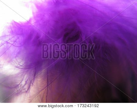 Violet bird feathers decoration background macro photo