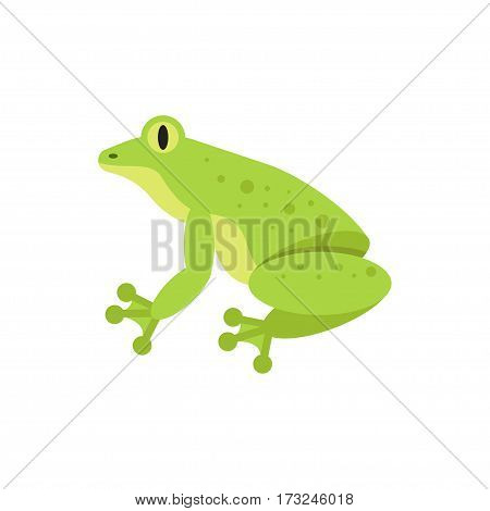 Vector flat style illustration of frog. Icon for web. Isolated on white background.