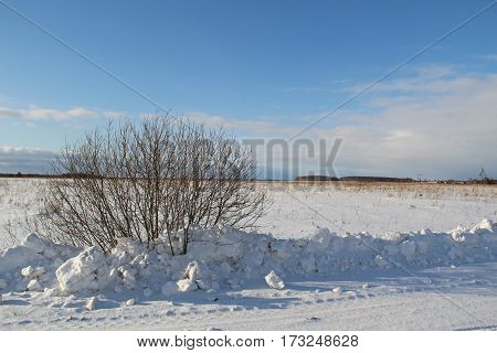 A single tree on a white snowy field near the road and blue sky. Winter. Russia.