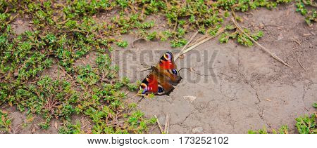 Butterfly sits on the ground and basks in the sun