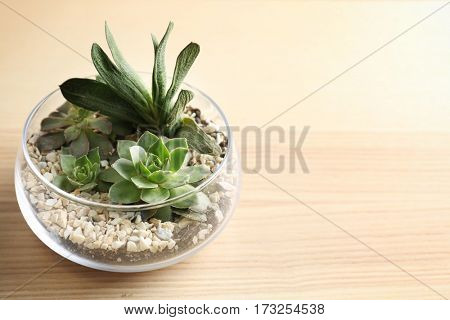 Florarium with succulents on wooden background