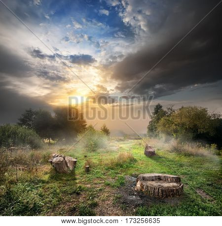 Sunlight and cloudy sky over the endangered forest and stumps