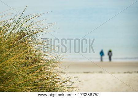 Dunes on the North Sea coast on the island Amrum Germany.