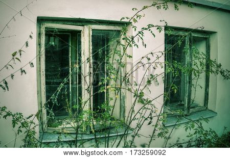 Wall with windows in abandoned spooky house overgrown with weeds and plants.