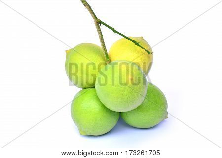 green lemons with branch on white background isolate