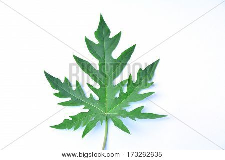 Green leaf, leaves on white background isolated