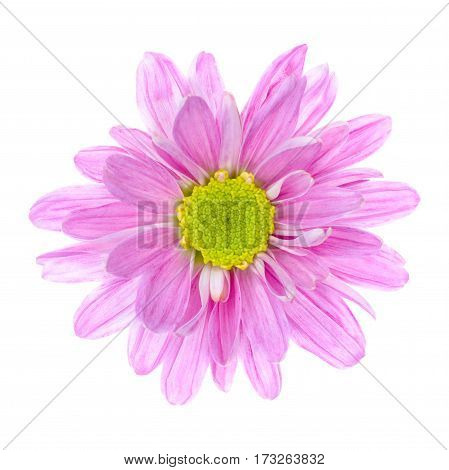 Close up of pink flower isolated on white background