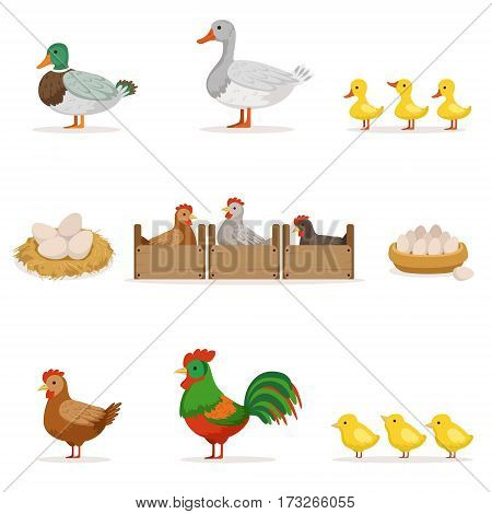 Farm Birds Grown For Meat and For Laying Eggs, Organic Farming Series Of Vector Illustrations With Animals. Farm Production With Adult And Baby Chickens, Ducks And Geese Cartoon Drawings.