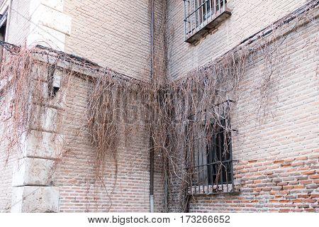 Alcala de Henares Madrid Spain- February 19 2017. Detail of Mozarabic brick wall with dried ivy next to the Plaza de Cervantes